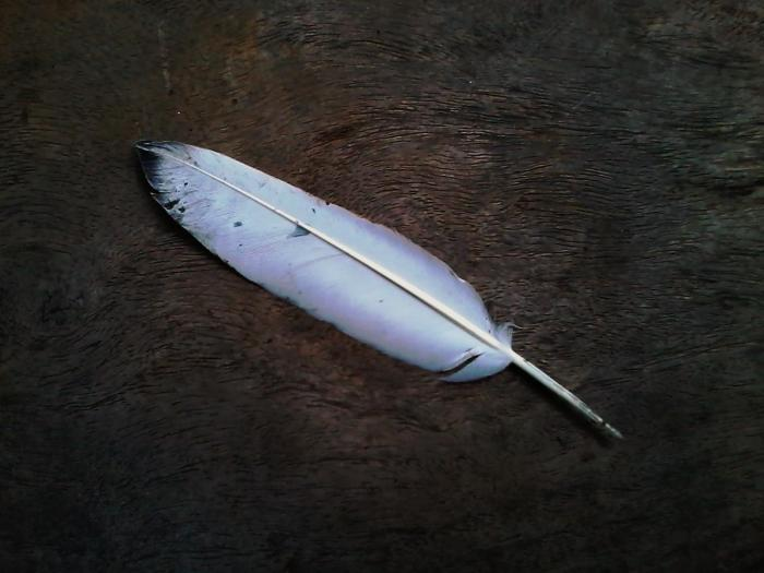 feather01